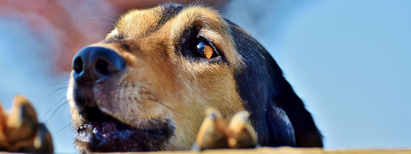 Oregon dog bite law