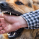 dog bite injury law